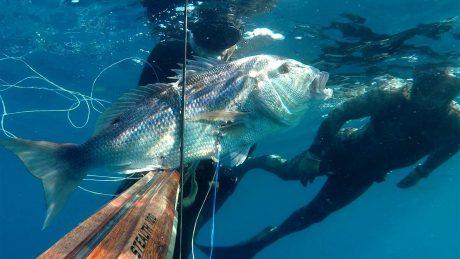 tecaj-podvodnega-lova-2