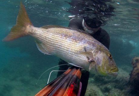 tecaj-podvodnega-lova-teorija-4