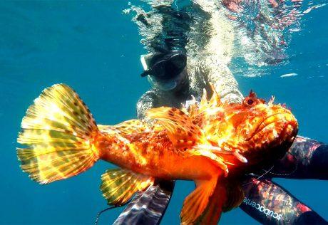 tecaj-podvodnega-lova-teorija-8